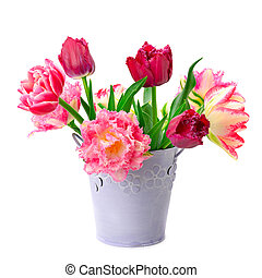 bucket with tulips isolated on white