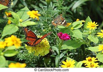 Buckeye and Viceroy butterflies - A buckeye (Junonia coenia)...
