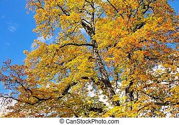 buckeye in fall 02