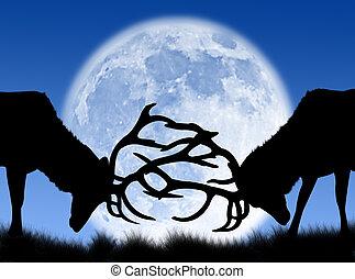 Bucks fight in the moon - Bucks fighting in the night and in...