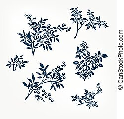 buckthorn honeysuckle vector ink illustration sketch japanese chinese style line art design set of branches design