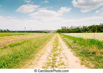 Buckwheat field and country road at spring day in Korea