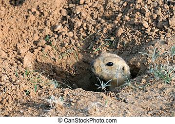 buco, scoiattolo, suolo