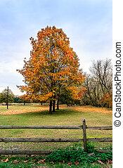 bucolico, paesaggio, di, pascolo cavalli, sotto, alberi autunno