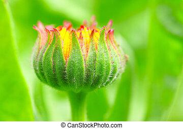 bud flower