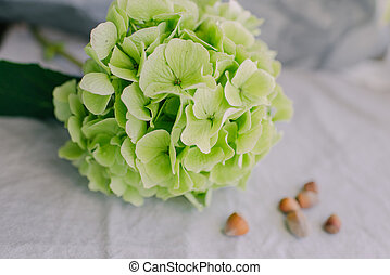 bud green hydrangea