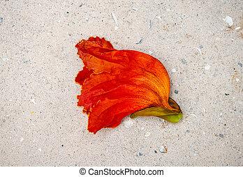 Bud red flower