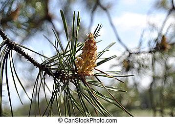 bud tree