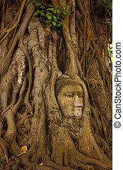 budda, pietra, albero, testa, radice