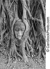 Buddha Head, Ayuthaya