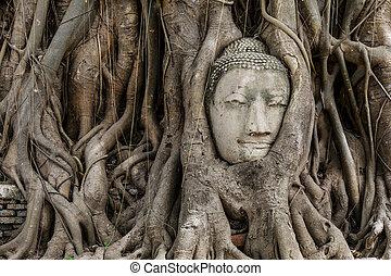 Buddha head in banyan tree