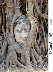 Buddha head in the tree roots