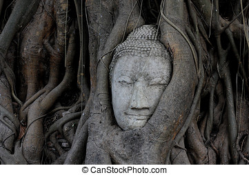 Buddha head overgrown by fig tree in Wat Mahathat Ayutthaya historical park