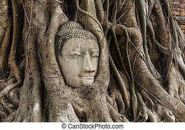 Buddha head statue in banyan tree at Ayutthaya