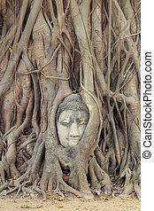 Buddha Head Statue in Banyan Tree, Thailand