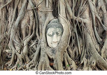 Buddha Head Statue in Banyan Tree