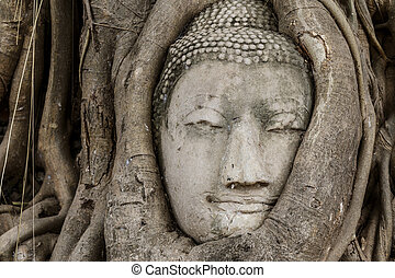Buddha head statue in old tree