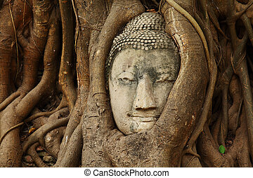 Buddha head statue in tree root