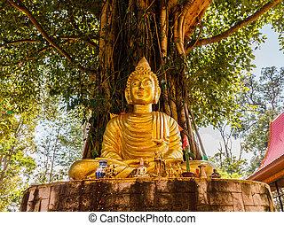 Buddha image under Bodhi tree