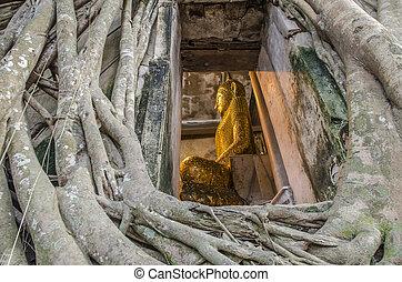 Buddha Statue in Banyan Tree, Thailand