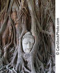 buddha, staty, in, den, rötter, av, träd, hos, ayutthaya,...