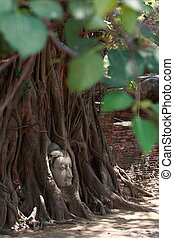 Buddha's head in banyan tree roots with little of sunlight area on head