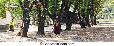 Buddhist novice