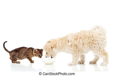 Buddies at the feeding bowl - dog and cat eating