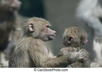 close friends monkeys