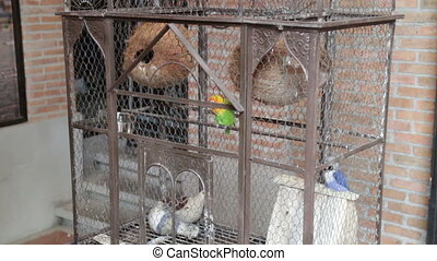 Budgerigar pet in the bird cage, stock footage