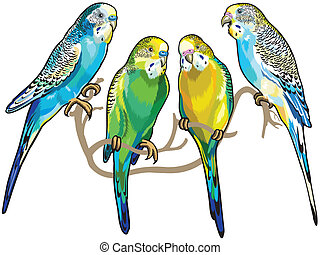parakeet illustrations and stock art 856 parakeet illustration and rh canstockphoto com free parakeet clipart Cute Parakeet Drawing