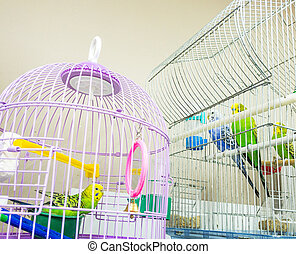 budgerigars in cages at pet-shop