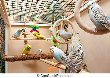 Multicolored budgies sitting in cage