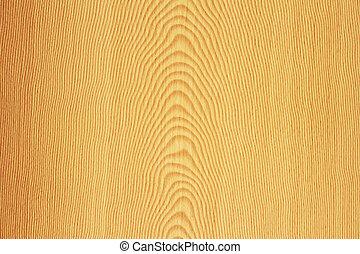 budowa drewna