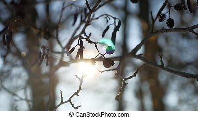 buds, природа, весна, swaying, дерево, ольха, ветер, филиал, наступление, пейзаж