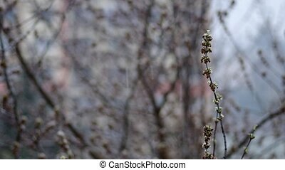 Buds on a tree in spring