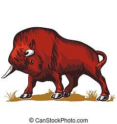 bufalo, bisonte, toro