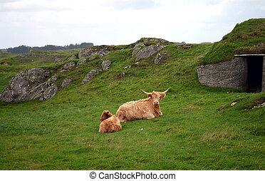 Buffalo family relaxing on grassland