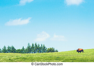 Buffalo on a green meadow