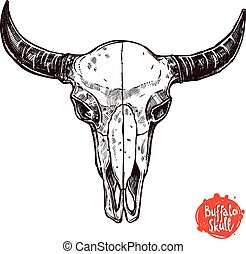 Buffalo Skull Hand Drawn Scetch