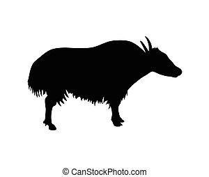buffalo vector silhouette