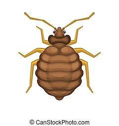 Bedbug on White Background. Vector