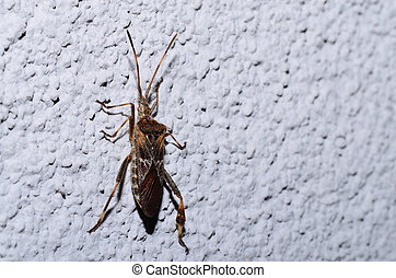 bug climbing on a wall