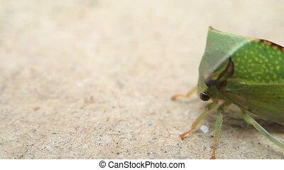 Bug going backward - A bug going backward