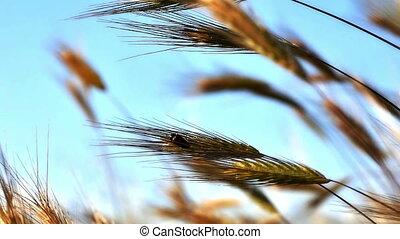 bug in grass  - bug in grass