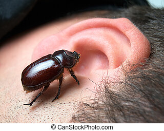 We've all heard stories about bugs crawling into people's ears and staying there.
