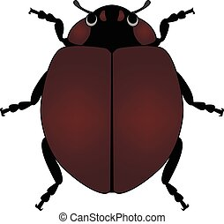 bug in vector on white background
