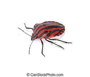 Bug isolated on white background