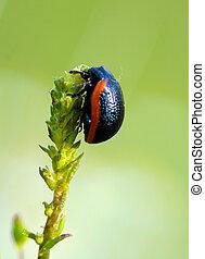 Bug on a green plant leaf