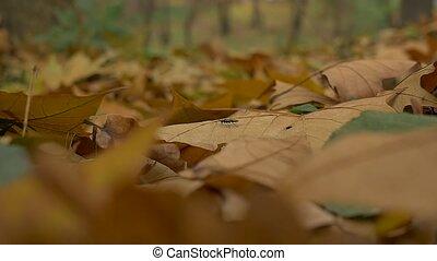 Bug on Autumn Leaves